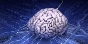 02_brain